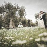 Olive Season